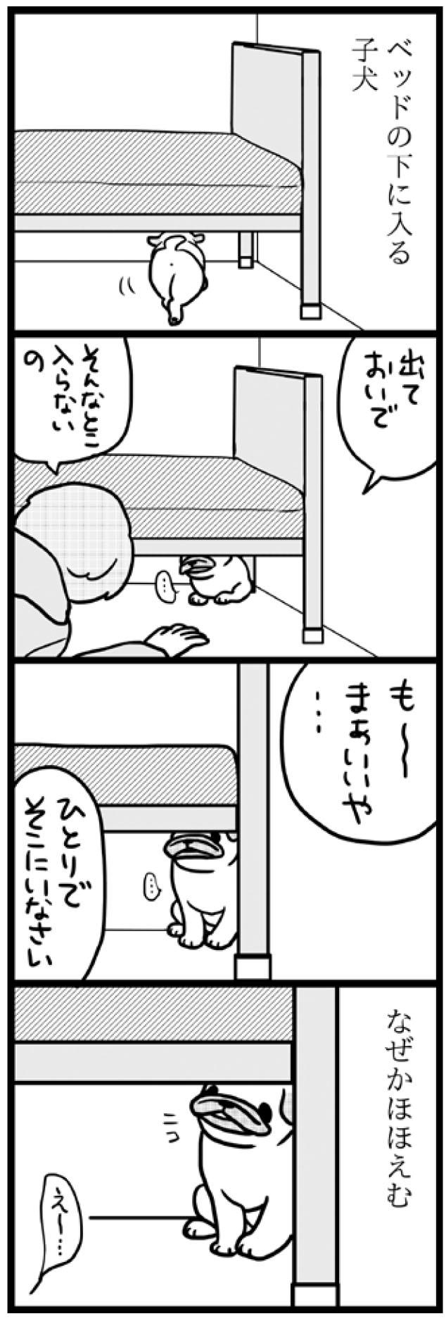パグ2_01